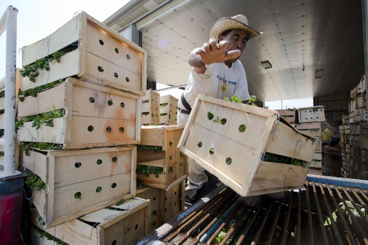 Locally grown foods look to bigger business