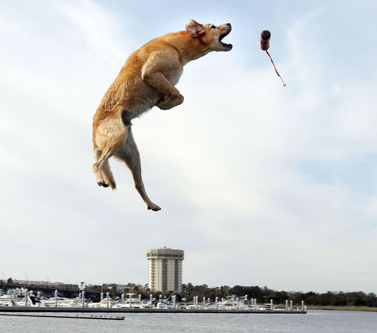DockDogs continues to make a big splash