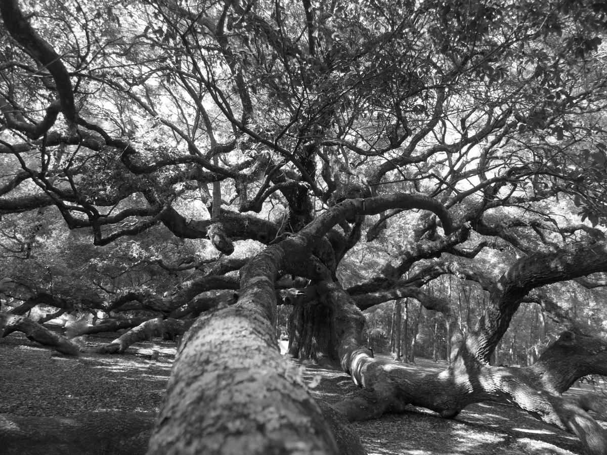 Kimberly-Wallace Angel Oak.jpg