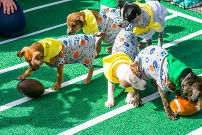 Puppies at Pup Bowl free-for-all