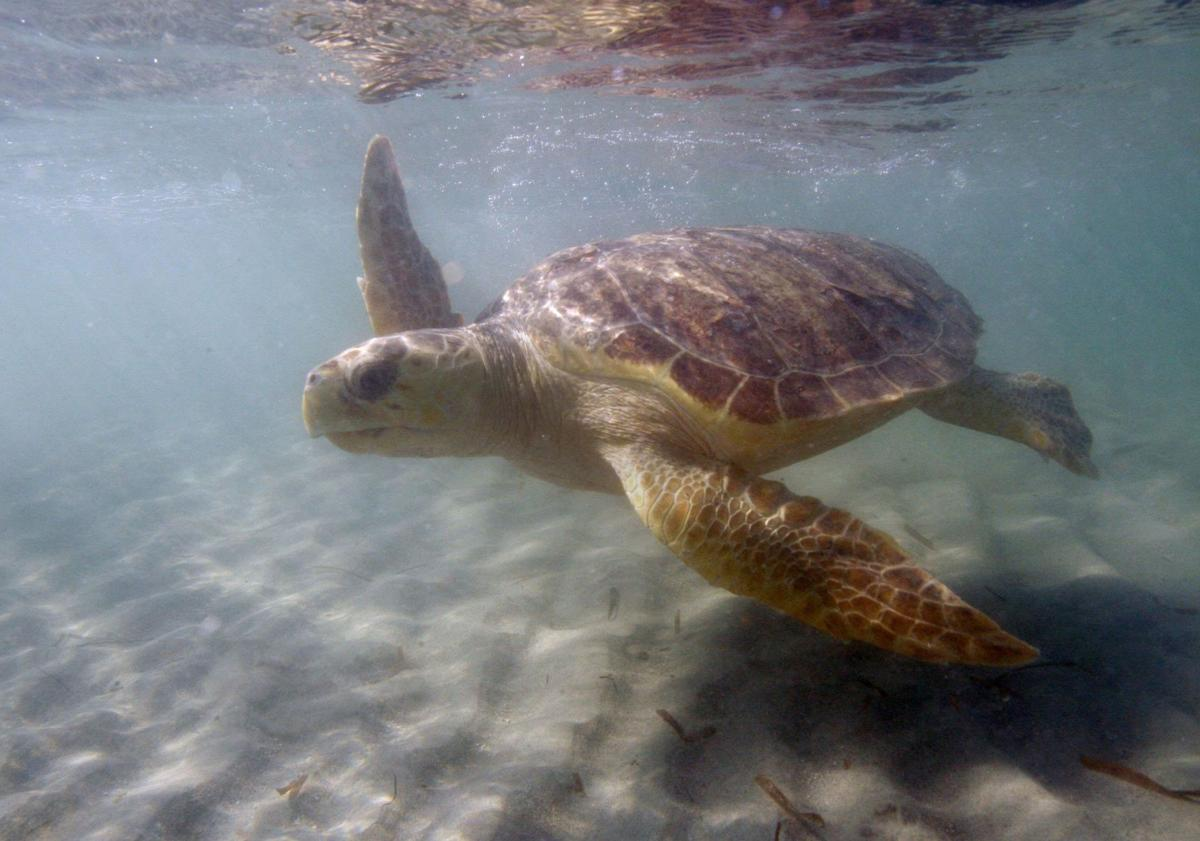 Suit aims to boost sea turtle protections