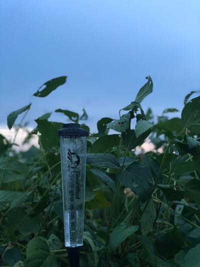 Pee Dee crop water level