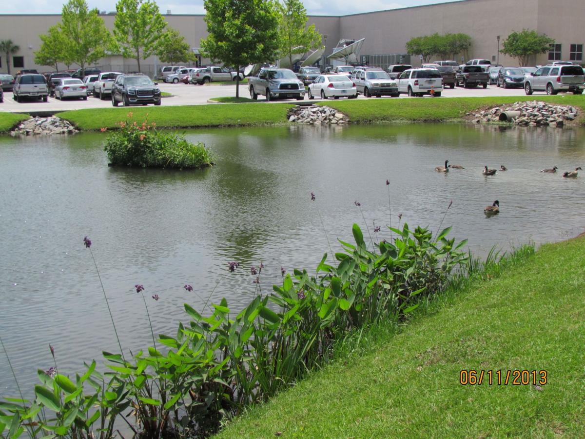 Floating wetlands help beautify, improve ponds