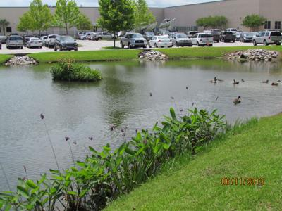 Floating wetlands help beautify, improve ponds