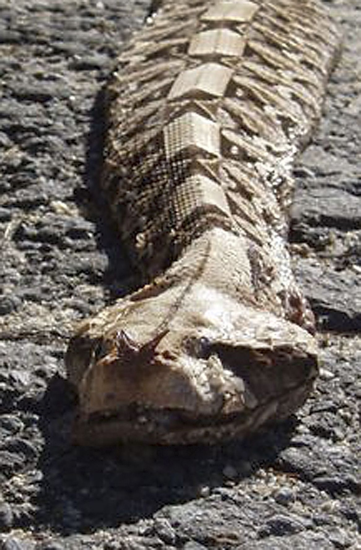 Deadly snake story could in fact be fish tale