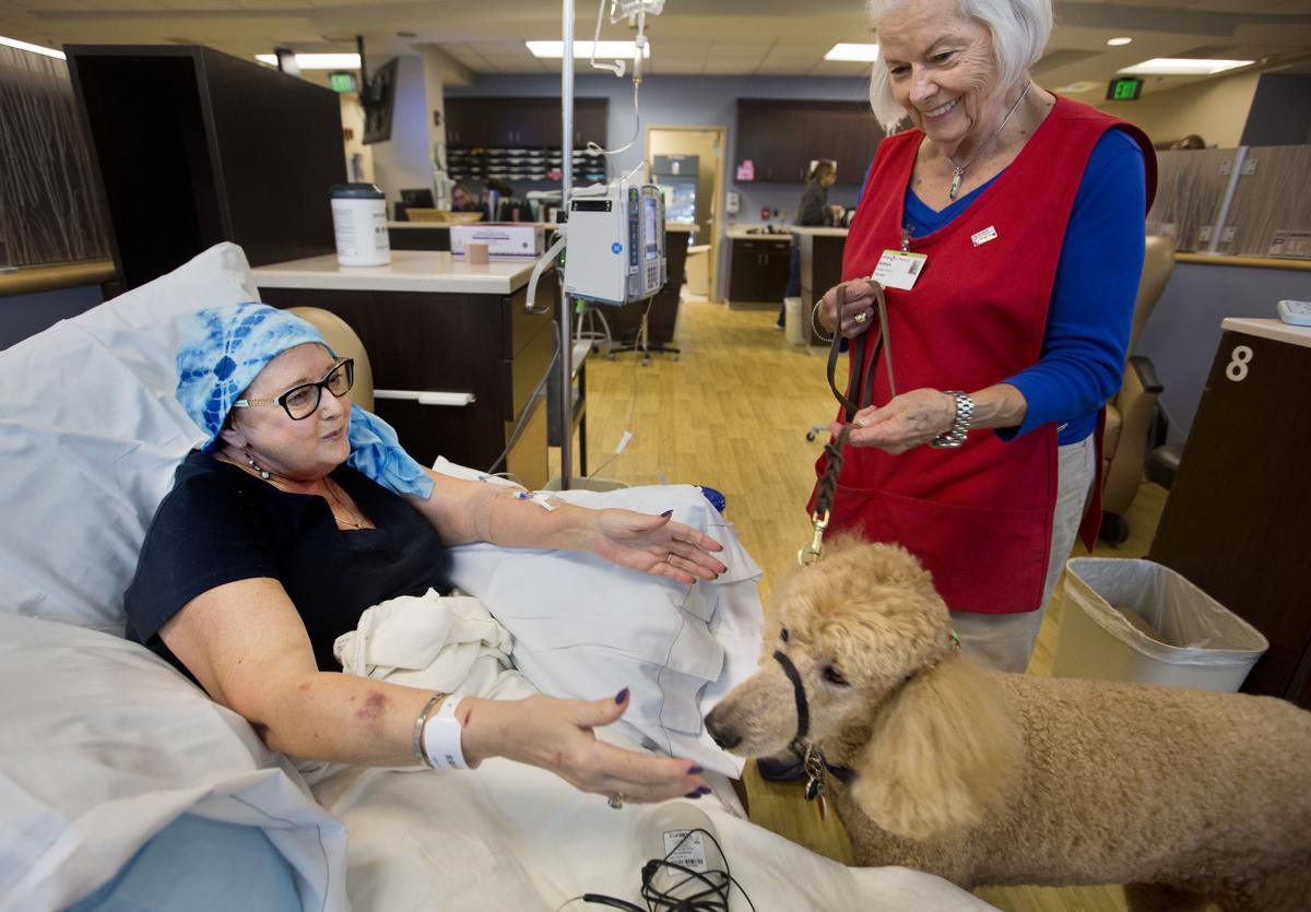 Lede Therapy dog.jpg