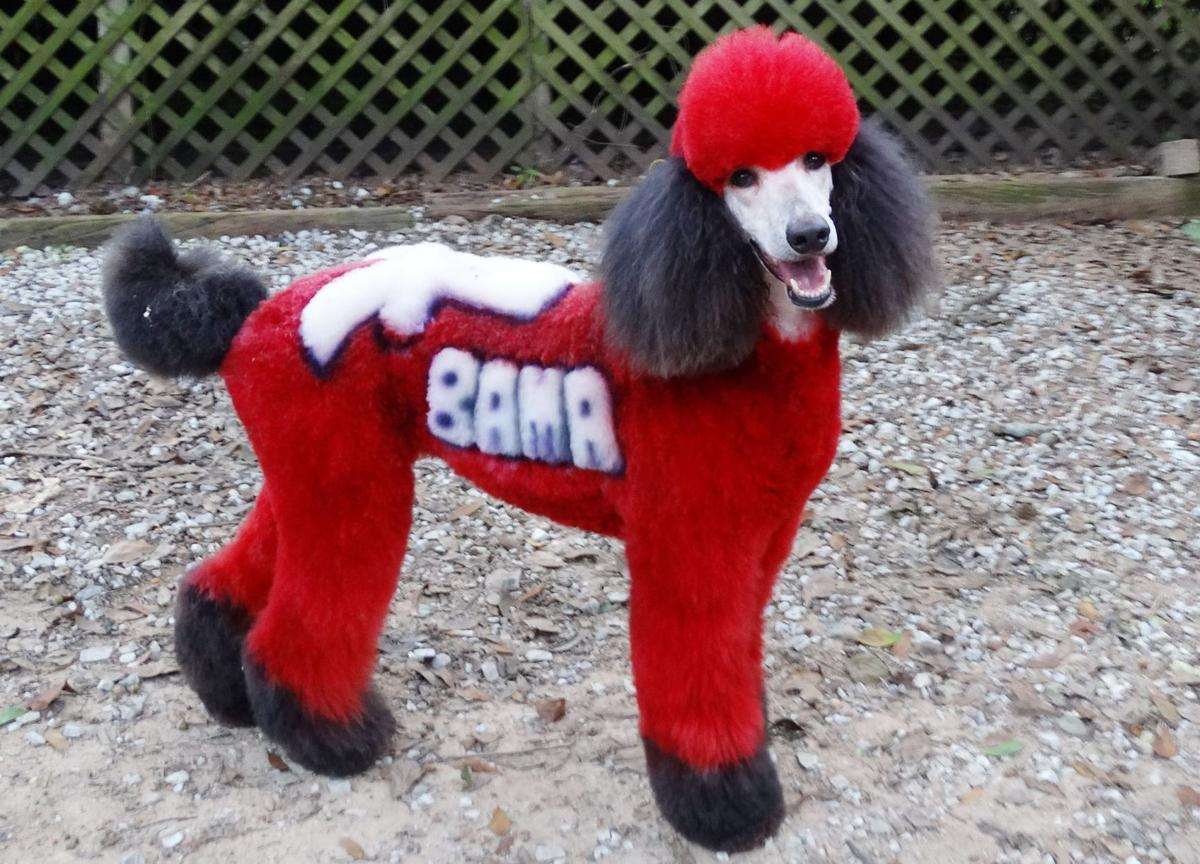 Some groomers are bedazzling dogs
