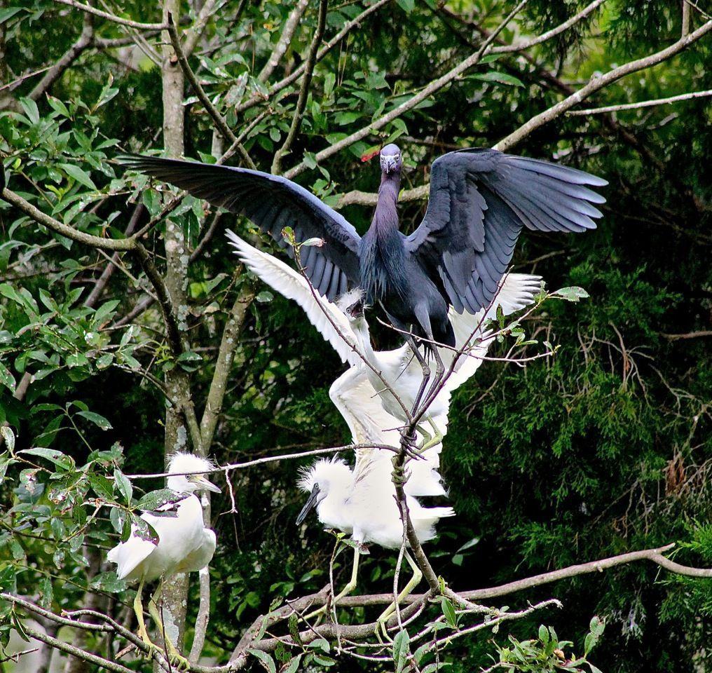 Reader photos: Winged Wonders (copy)