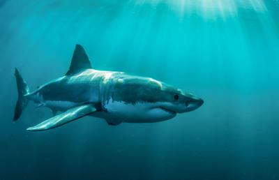 Scary sharks? The much maligned predators rarely hurt people but are common in the shallow waters off our coast