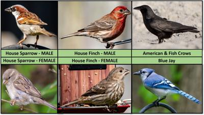 DHEC wants certain birds for West Nile testing