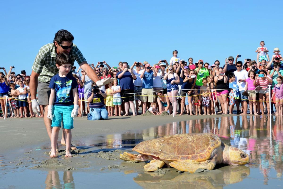 Large sea turtle released on Isle of Palms