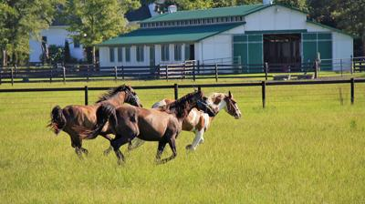 Pasture Quest: Horse owners, equestrian enthusiasts, grassland fans scout properties in Charleston's rural areas and beyond