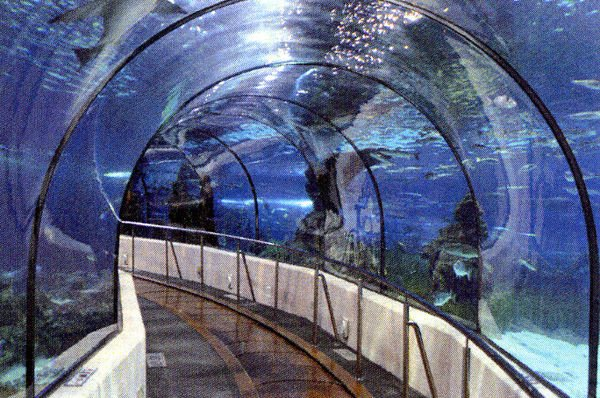 Aquarium's future: Attraction eyes changes to be more inviting, interactive