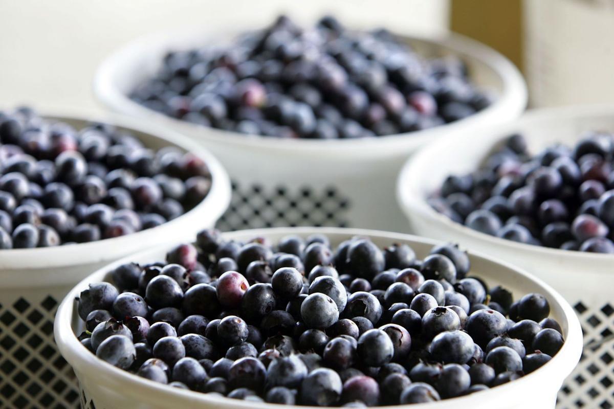 Mixson Market to celebrate Blueberry Bonanza on Saturday