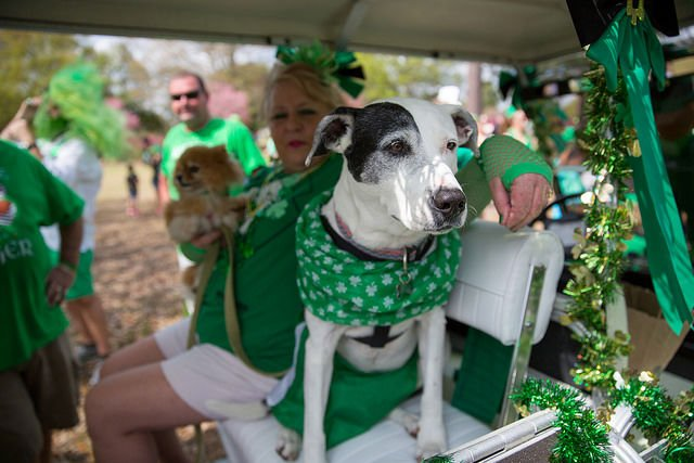 Park Circle St. Pat's dogs in golf cart