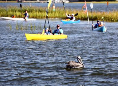 pelicanafloat circle crab bank.jpg (copy)