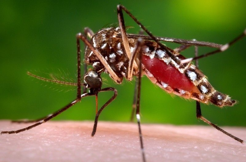 Four more South Carolina residents contracted Zika; 11 total for state