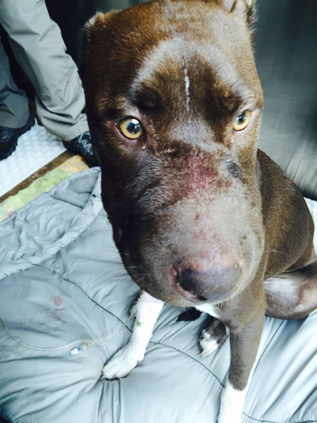 Reward to find person who taped dog's mouth shut grows to $6,000