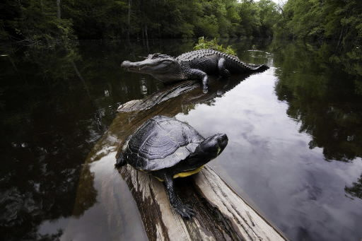 Photo earns naturalist international honor