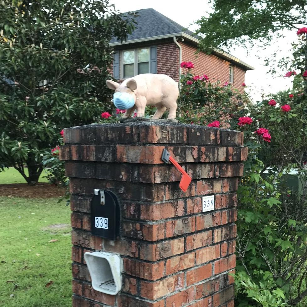 Pig with mask on mailbox near Florence