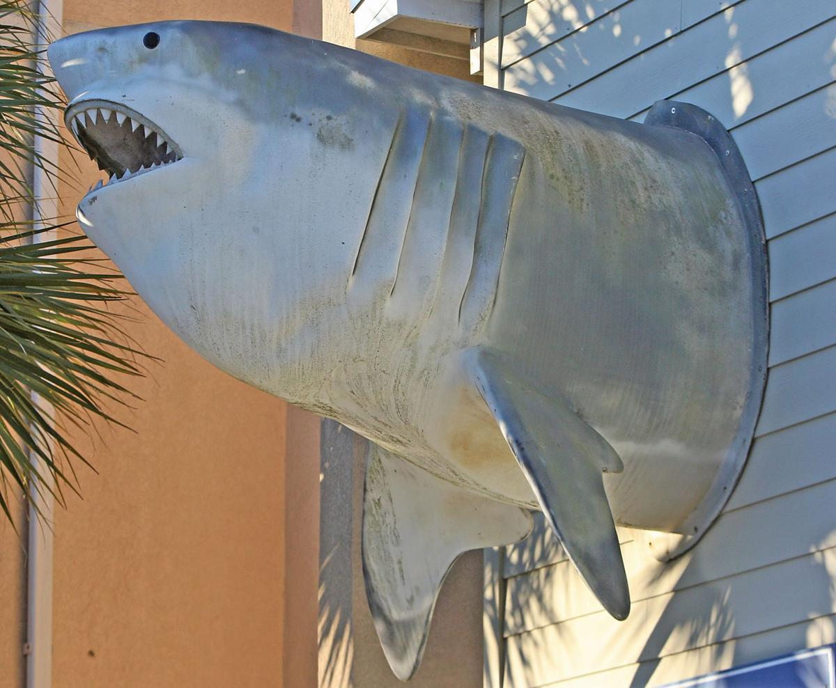 Land shark presides over downtown Folly
