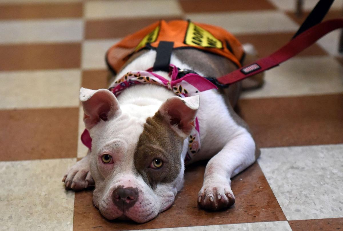 Can South Carolina become 'no-kill' for shelter animals?