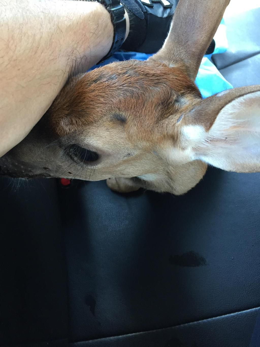 Mount Pleasant officers rescue baby deer caught in briars on Rifle Range