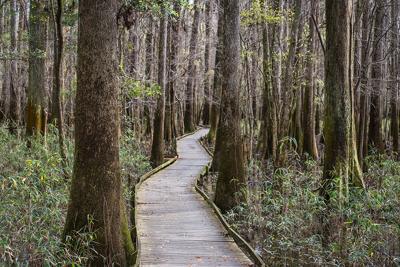 Congaree trail (copy) (copy)