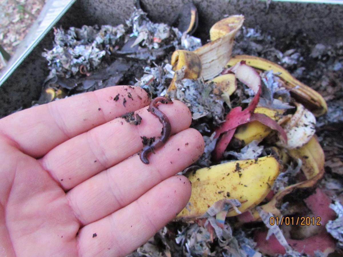 Compost using worms, larvae Nutrient-rich matter is result