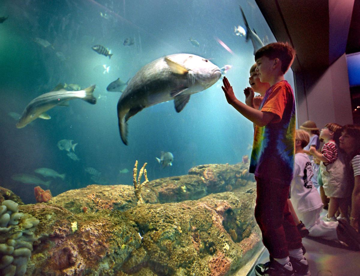 Panel plans to defend role of aquarium, zoo exhibits Experts to weigh in at Charleston event