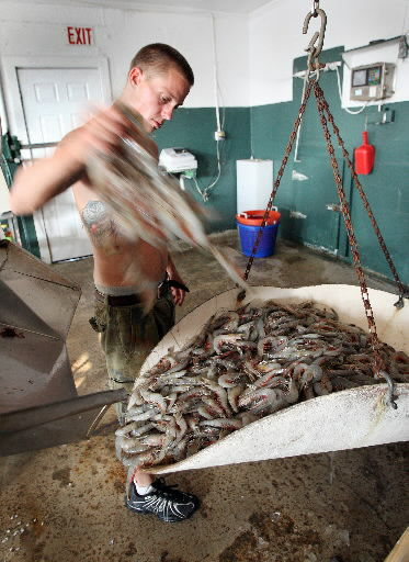 Sales good for area shrimpers