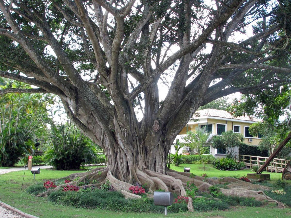 Tropical houseplants need a little coddling