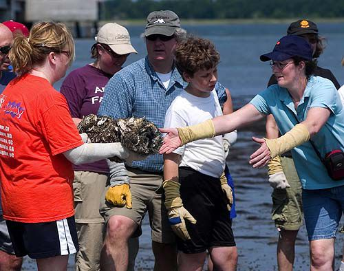 Boy's project turns into much-needed oyster reef