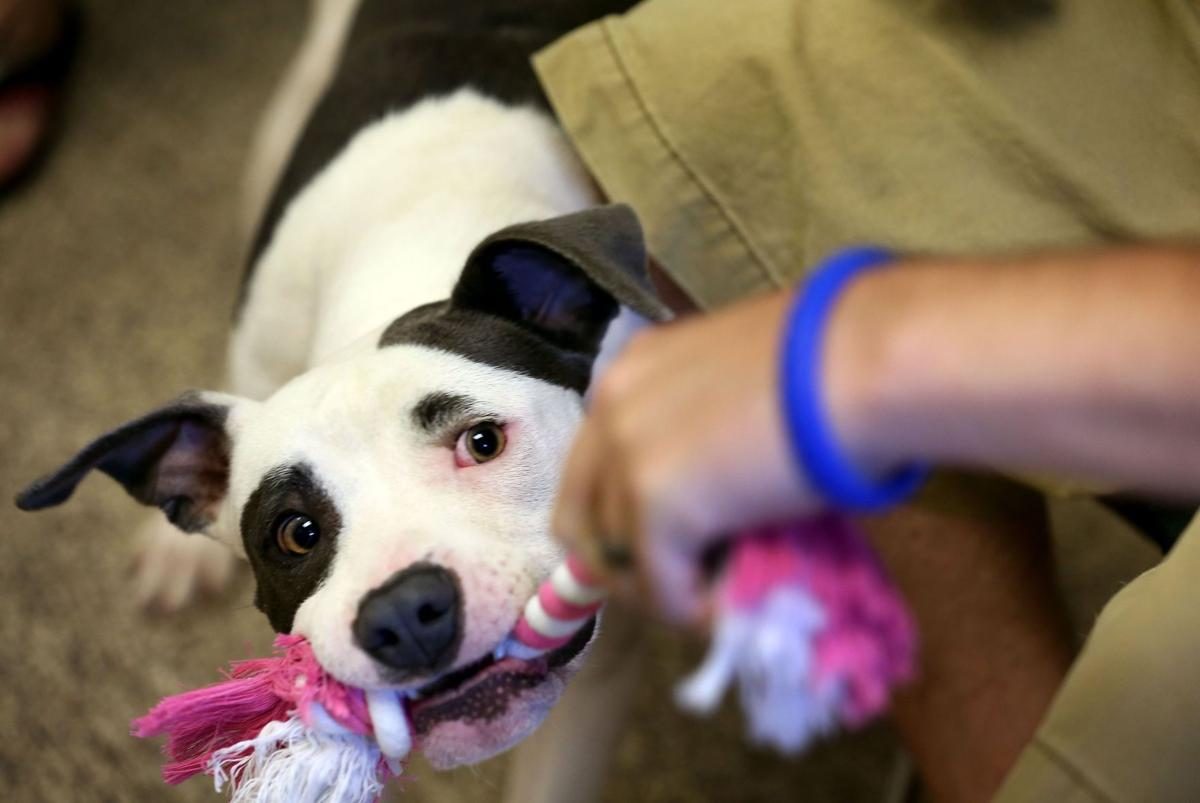Record heat, record animal adoptions on Saturday