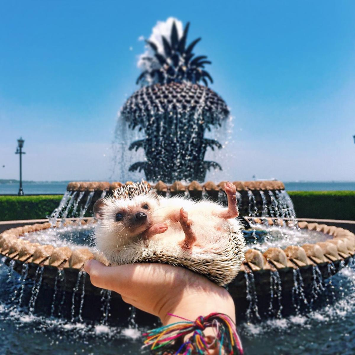 Lionel The Hedgehog: Fountain
