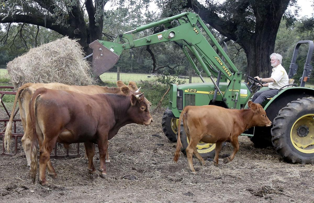 Corn profits drying up