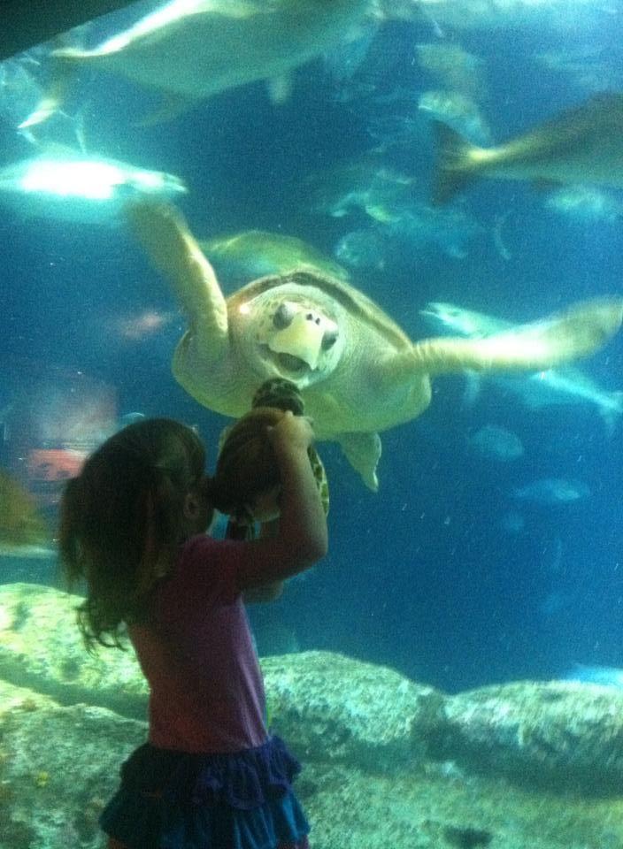 Social media recap: Elliott Summey goes big on ALS challenge; a sea turtle smile