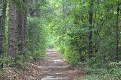 Hitchcock Woods 001.JPG (copy)