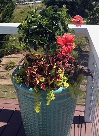 Container gardening Local Master Gardeners offer advice on keeping creative planters beautiful