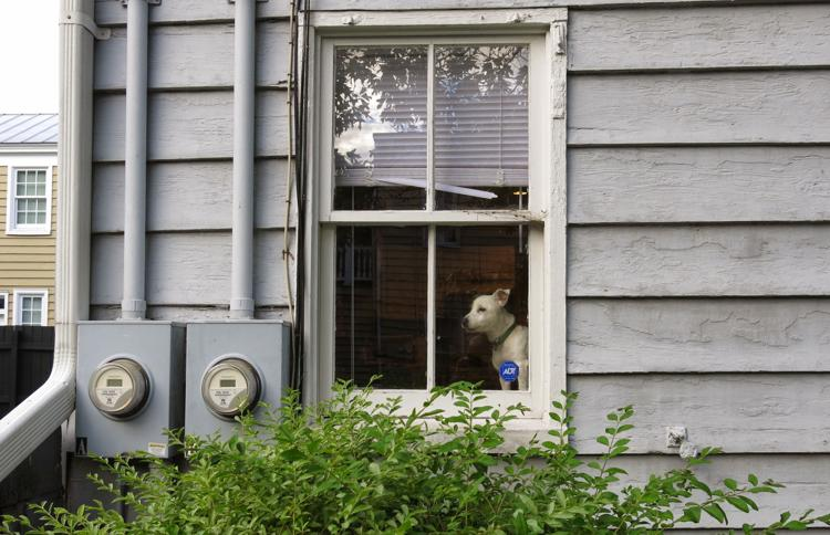Homeowners and renters need insurance, and dogs can ...