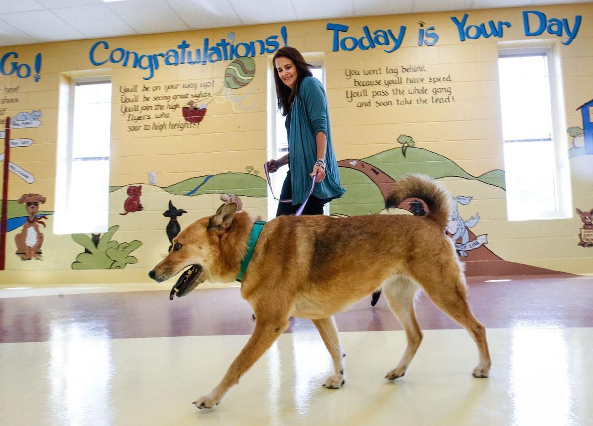 Carolina Dogs go north for permanent homes