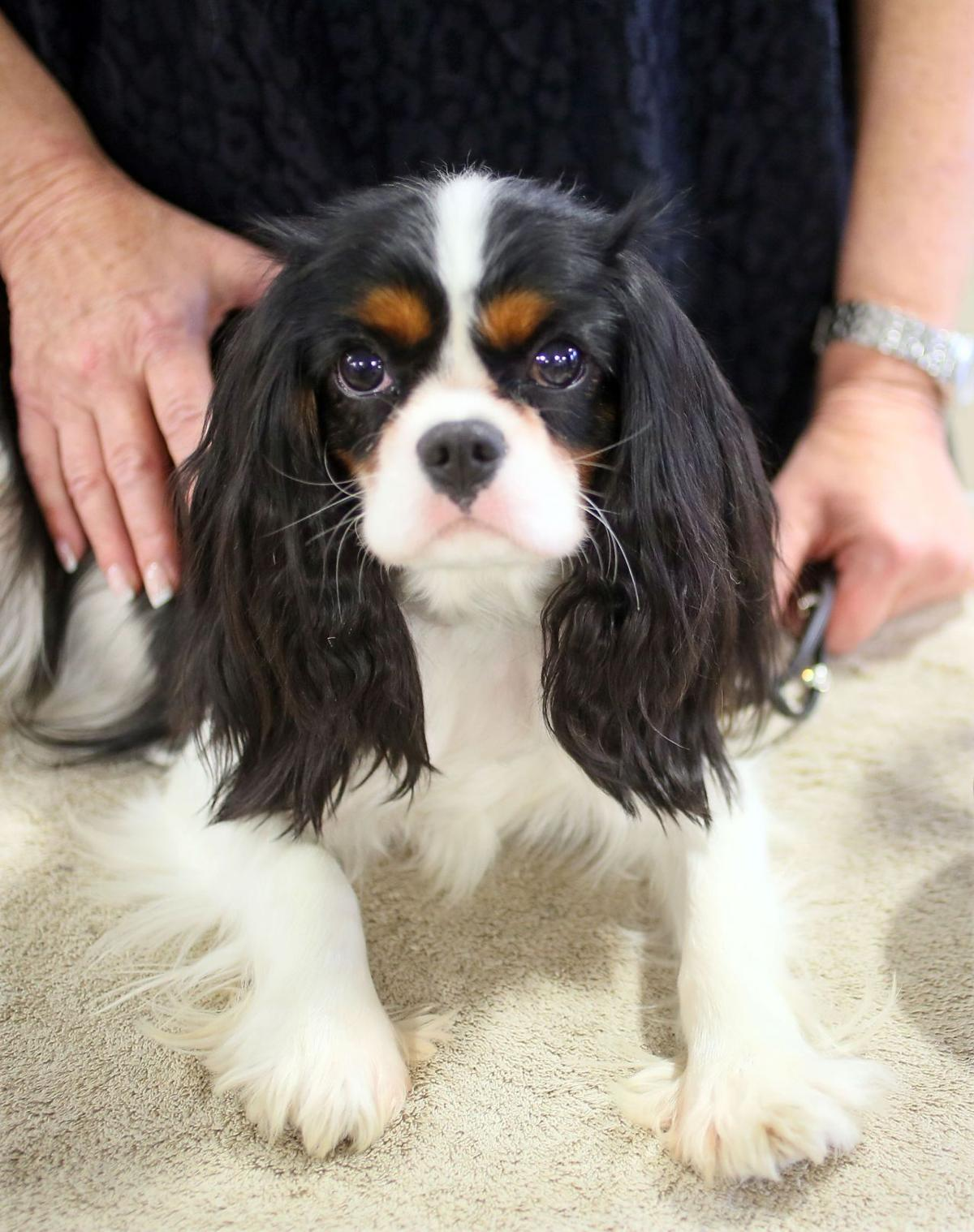 Charleston Kennel Club Dog Show