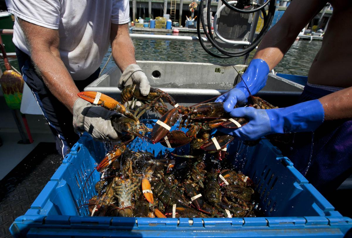 Maine lobster fishing season off to slow start (copy)
