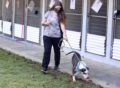 Dorchester Paws anxious for new pet shelter