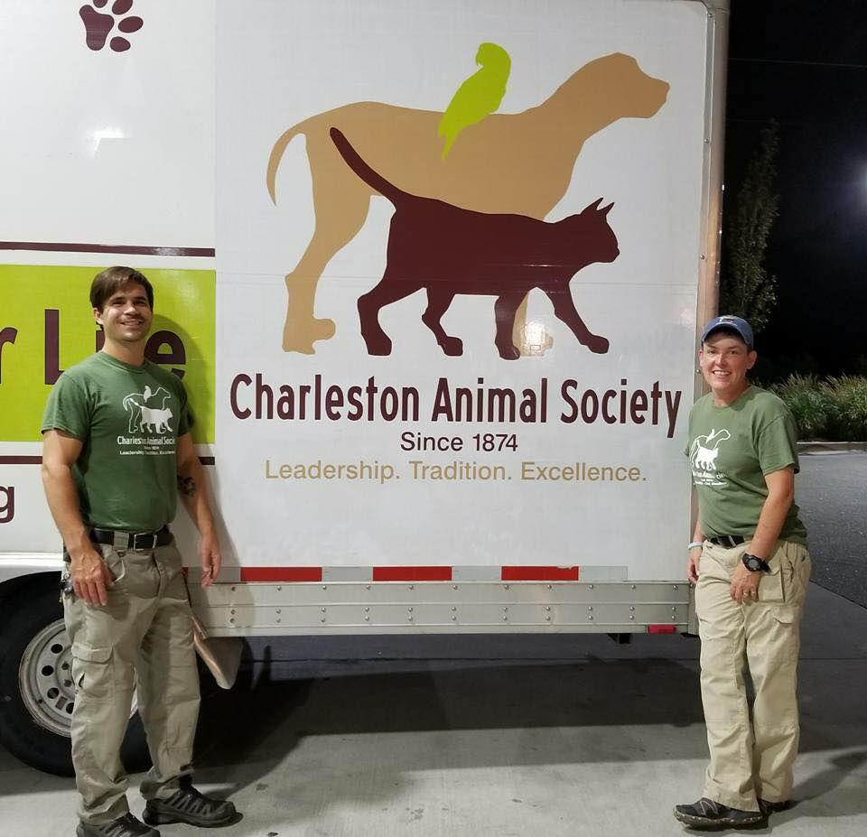 Charleston Animal Society Cats And Dogs