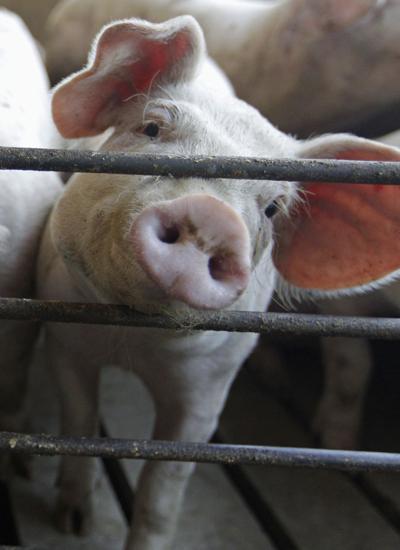 Bacon shortage 'baloney'