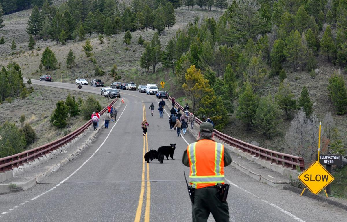 Video shows mother bear rushing tourists