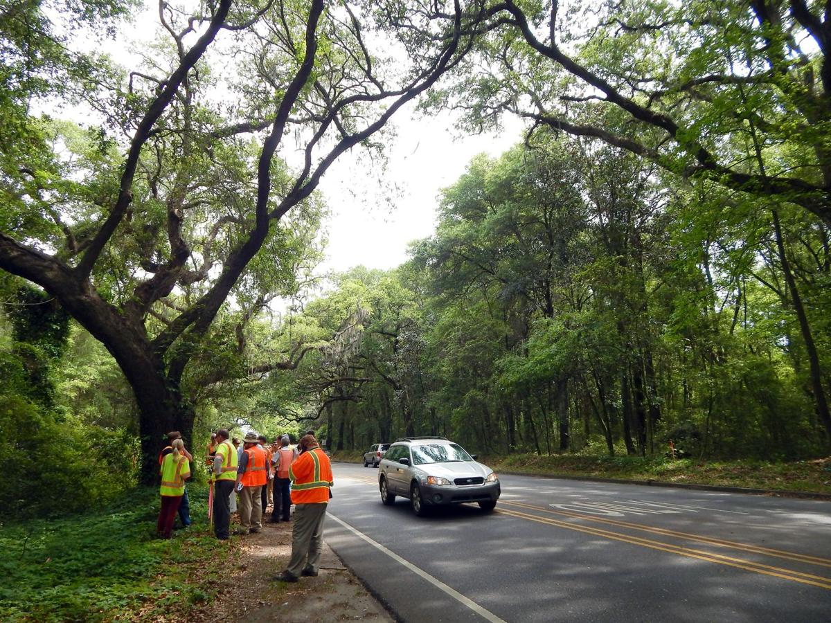 Can Maybank be widened without losing live oaks?