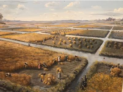Rice fields of the Santee Delta (copy)