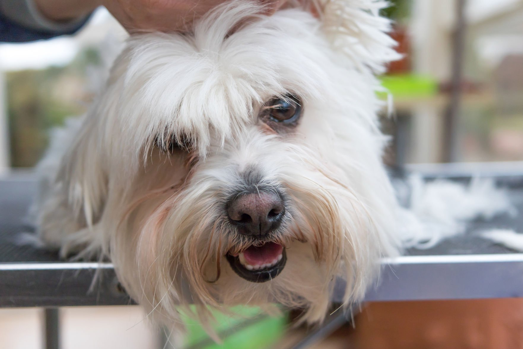 fresh cuts there s more to grooming than being clean pets rh postandcourier com